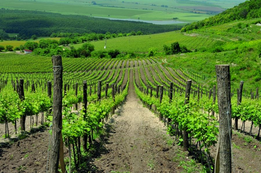 Винарски изби в България