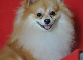 Grooming Studio Dog Star
