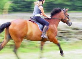 треньор по конен спорт Цветомира Цветкова