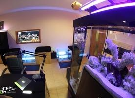 LMF SPA fish studio