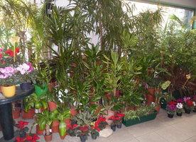 Магазин за цветя Джунглата