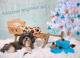 Photo Pet M