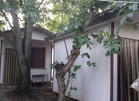 Бунгала Нестинарка
