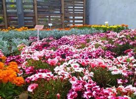 """""""Цветята на градинарите"""""""