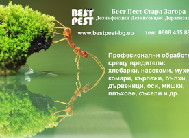 Best Pest
