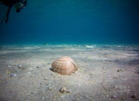 Sub Diving