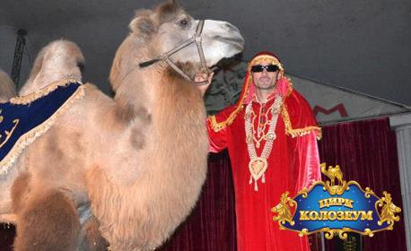 Вход за спектакъл на Цирк Колозеум - на 23, 24, 25 или 26 Май