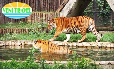 Еднодневна лятна екскурзия до Букурещ с възможност за Природонаучния музей, Музея на селото и Зоологическата градина
