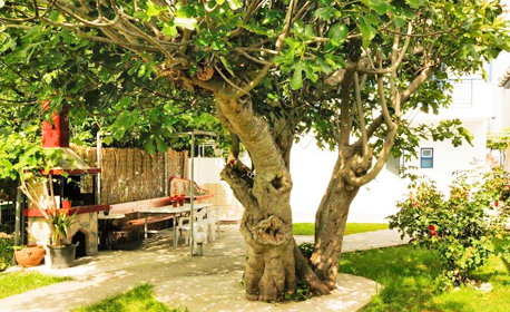 През Май и Юни на остров Тасос! 5 нощувки със закуски - за до четирима