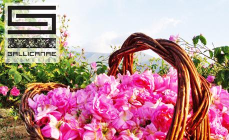 Лосион за тяло Seven Roses или био олио против стрии Gallicanae