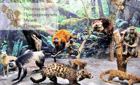 Вход за Регионален природонаучен музей - Пловдив! Разглеждане на експозицията - за един възрастен и едно дете