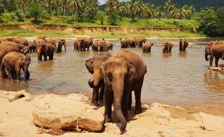 До Малдивите, Шри Ланка и Индия през Ноември! 9 нощувки със закуски, плюс 7 обяда и вечери, самолетен билет и круиз