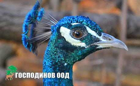 """Семеен вход за Първа частна зоологическа градина """"Горски чифлик"""" до Ресторант Горица - за двама възрастни с до 2 деца"""