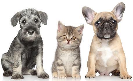 Подстригване, къпане, разресване и изсушаване на куче