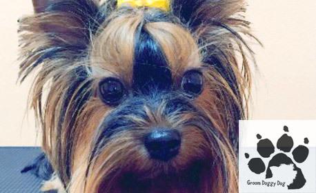 Грижа за кучето! Къпане и разресване, с възможност за SPA терапия, подстригване и подрязване на нокти