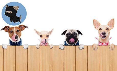 Груминг услуги за куче - къпане, подстригване, прическа, почистване на уши, подрязване на нокти и почистване на зъби