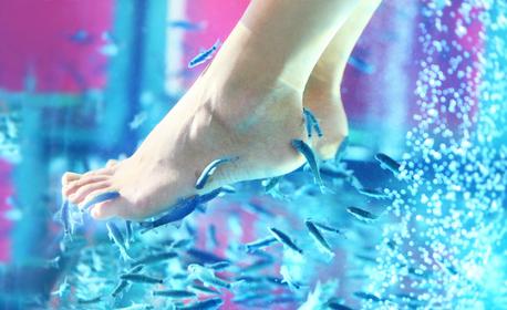 Педикюр с гел лак, плюс Fish SPA терапия на ходила с рибки Garra Rufa