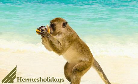 Райско преживяване! Посети остров Пукет със7 нощувки със закуски, плюс самолетен транспорт