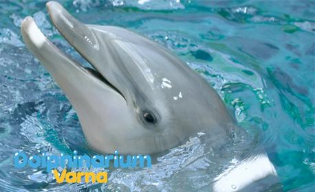 Вижте Делфин шоуто на Варна Делфинариум на дата по избор