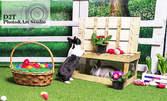 Великденска фотосесия в студио с живи зайчета - с 5 или 10 обработени кадъра