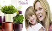 Кашпа за вашите цветя! Облечете саксиите с оригинални решения