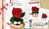 """Вечна роза в стъкленица """"Романтин"""" или """"Красавицата и звяра"""""""