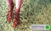 Fish SPA терапия за стъпала с рибки Garra Rufa