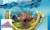 """Вход за двама или за семейство с 2 деца за изложба на екзотични рибки """"Зарибяващо"""""""