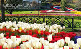 В Истанбул за Фестивала на лалето! 3 нощувки със закуски, транспорт и посещение на Лозенград