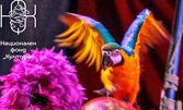 Вход за спектакъл на Цирк Феникс - от 9 до 18 Юли