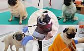 Процедури за куче или коте - къпане, изсушаване, разресване и подрязване на нокти