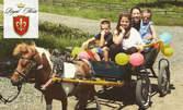 3 часа рожден ден за до 20 деца - с езда, игри и забавления