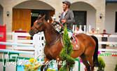 25 минути конна езда - разходка или обучение с инструктор за начинаещи