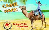 Парк с камили