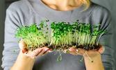 """Комплект """"Отгледай сам микрорастения 2 в 1 - броколи и репички"""""""