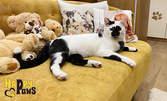 24-часов престой на домашна котка в хотел за домашни любимци - без или със включена храна