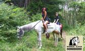 Разходка с кон или обучение по езда в естествена среда - в Конна база Драгалевци