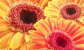Букет цветя от Бутик за цветя и подаръци Сиел
