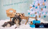Коледна фотосесия с вашите домашни любимци - с 6 или 12 обработени кадъра