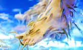 Терапия на ходила с рибките Garra Rufa - 1 или 3 процедури