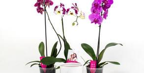 Орхидея в цвят по избор