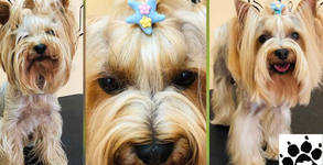 Grooming studio Doggy Dog