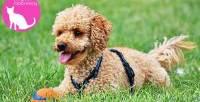 За любимото куче! Къпане, изсушаване, разресване и подстригване с професионална козметика
