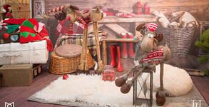 Коледна фотосесия в студио или на открито - с 10 или 20 обработени кадъра