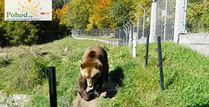 Еднодневна екскурзия до Белица и Добърско на 20 Април, с посещение на Парка за танцуващи мечки