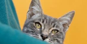 Български любители на котки