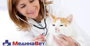 Кастрация на женска котка или женско куче до 10кг