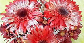 Букет от гербери и хризантеми в пиафлора