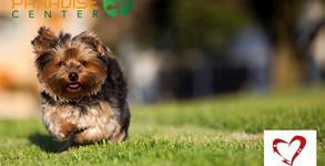 Нова прическа за кучето - в Парадайс център! Цялостно подстригване