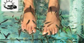 Релаксиращ масаж и пилинг на ходила с рибки Garra Rufa